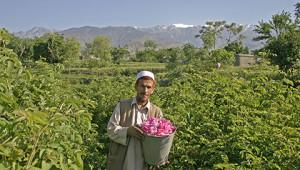 Essence huile de rose d'Afghanistan Dr. Hauschka