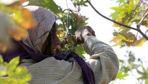Essence huile de rose de l'Ethiopie Dr. Hauschka