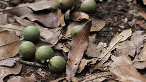 Noix macadamia du Kenya Dr. Hauschka