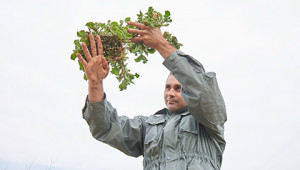 Plante de glace d'Afrique du Sud Dr. Hauschka
