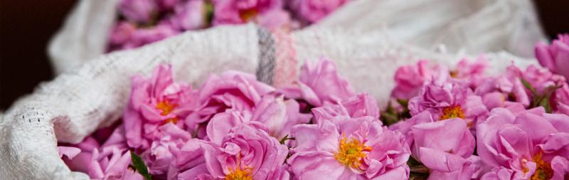 Dr. Hauschka valeurs: rose damas