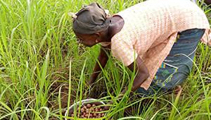 Le beurre de karité du Burkina Faso Dr. Hauschka