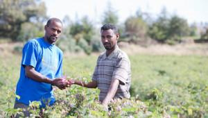 Projets de cultivation à travers le monde Dr. Hauschka