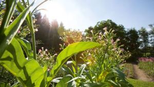 Questions sur protection de l'environnement Dr. Hauschka